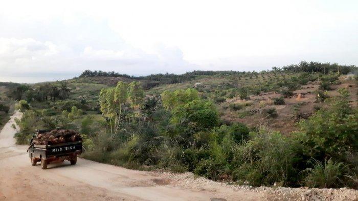 481 Hektare Lahan Kelapa Sawit di Paser Bakal Direplanting, Total Anggaran Capai Rp 14,4 Miliar