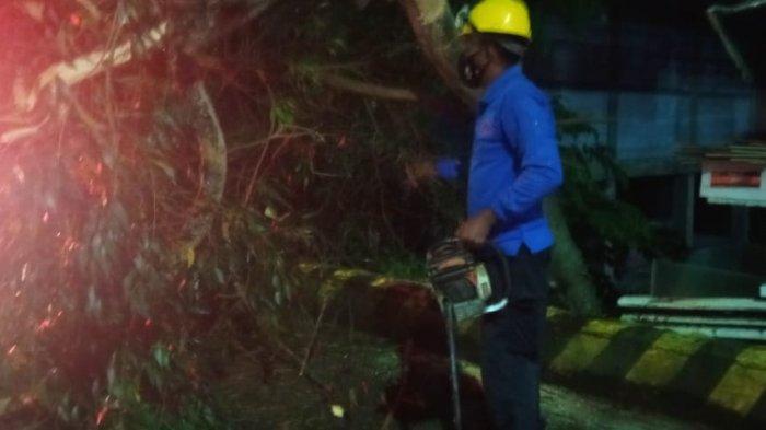 Pohon Tumbang Akibat Hujan Deras di Balikpapan, Arus Lalu Lintas jadi Macet