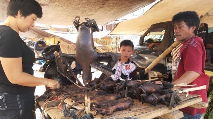 Selain Corona Ditemukan 5 Virus Baru Pada Kelelawar Pemakan Buah, Berpeluang Menyebar di Indonesia