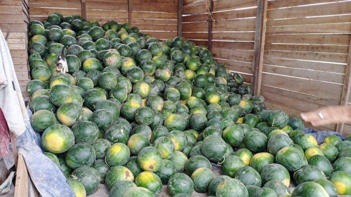 Hasil pertanian semangka di Desa Tepian Baru, Kabupaten Kutai Timur, Provinsi Kalimantan Timur.