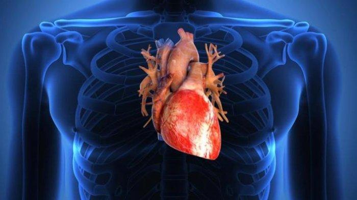 Berikut ini Kebiasaan-kebiasaan Sehat yang Dapat Membantu MencegahPenyakit Jantung