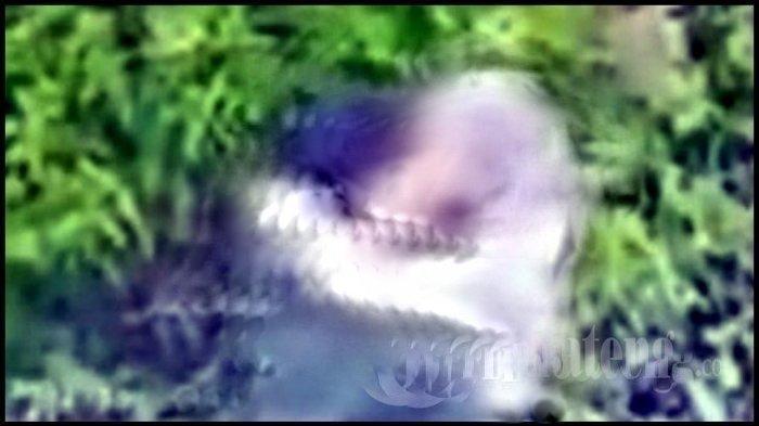UPDATE Video Viral Kebun Teh Kemuning Berisi Tayangan Aksi Mesum Sepasang Kekasih, Pelaku Diburu