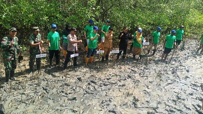 Antisipasi Abrasi di Pesisir, Bupati PPU Bersama PHKT Tanam 1.000 Pohon Mangrove di Kampung Baru