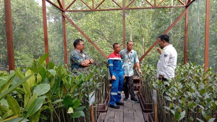 Pertamina Resmikan Rumah Pembibitan Mangrove Margomulyo, Jadi Tempat Penelitian dan Edukasi