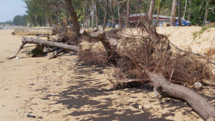 Update Tumpahan Minyak di Pantai Manggar, Kemungkinan itu Oli Bekas, DLH Bersihkan 30 Traceback