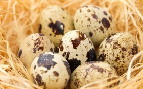 Konsumsi Telur Puyuh bisa Kurangi Penyakit Jantung, Tapi Ingat Jangan Berlebihan