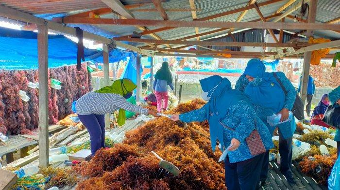 Buka Lapangan Kerja di Nunukan, Pemkab Gaet Investor Dalam Negeri Rumput Laut