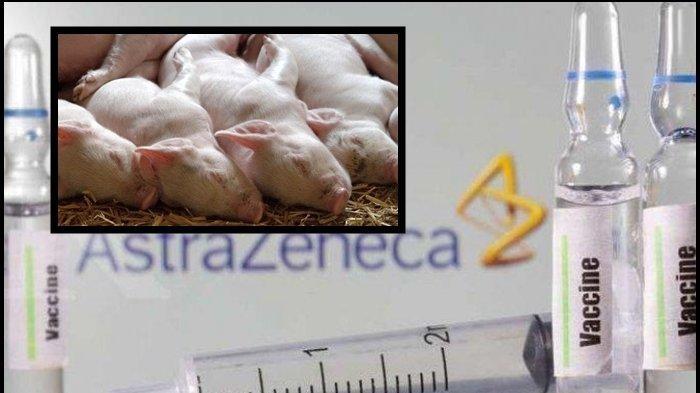 Ada Kandungan Tripsin Babi, MUI Sebut Vaksin AstraZeneca Haram, tapi Boleh Dipakai Vaksinasi Corona