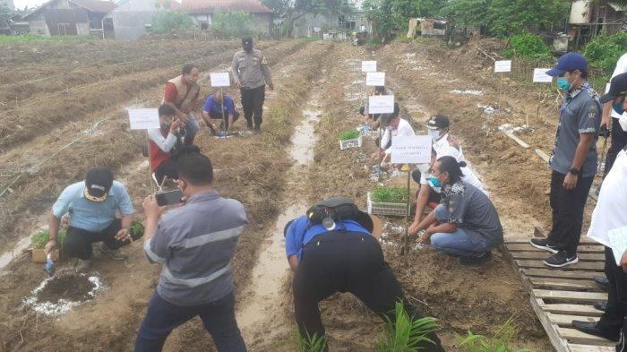 Wakil Walikota Samarinda Rusmadi Ikut Tanam 1000 Pohon Pepaya di Loa Bakung