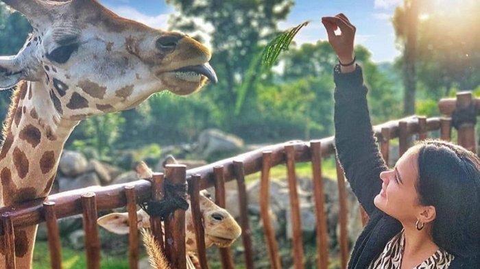 Dapatkan Promo Tiket Masuk Taman Safari Prigen Diskon 25 % hingga 11 Oktober 2021, Ini Syaratnya