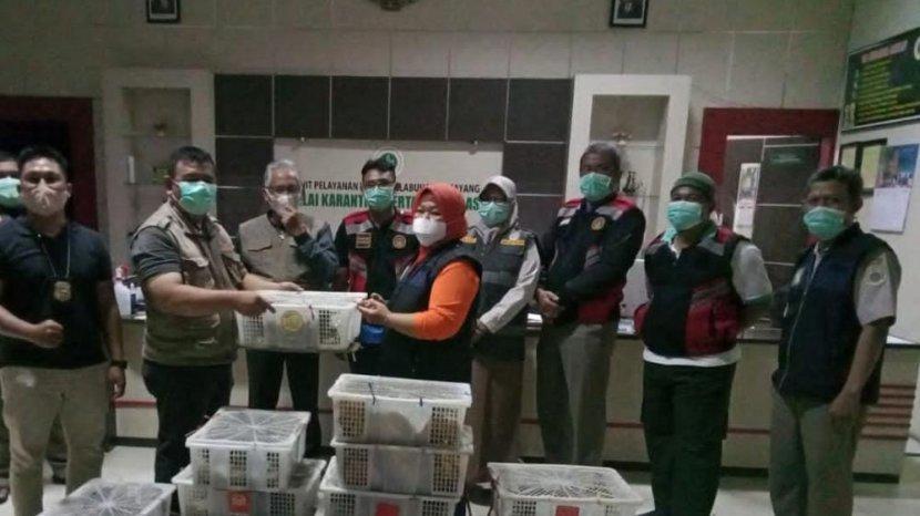 petugas-karantina-pertanian-balikpapan-kembali-menggagalkan-upaya-penyelundupan-ratusan.jpg