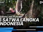 5-satwa-langka-indonesia-ini-terancam-punah-dan-penyebabnya.jpg