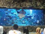 acara-feeding-show-di-sea-world-ancol-jakarta.jpg