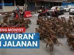 akibatkan-kemacetan-lalu-lintas-2-geng-monyet-tawuran-di-jalanan.jpg