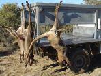 alami-kekeringan-100-persen-pemerintah-australia-izinkan-petani-menembak-kanguru_20180809_142527.jpg