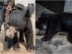 beruang-menari-nepal_20180323_184752.jpg
