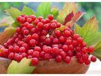 boldskycom-cranberry.jpg