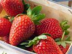 buah-strawberry.jpg