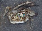 burung-penuh-sampah_20180108_142219.jpg