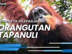 detik-detik-pelepasliaran-orangutan-tapanuli-di-kawasan-ca-dolok-sipirok.jpg