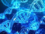 dna-genetika-111.jpg