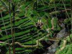 dok-alas-harum-agrotourism-alas-harum-agrotourism-di-tegallalang-bali.jpg