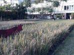fasilitas-alam-terbuka-yang-ditawarkan-oleh-scientia-square-park.jpg
