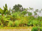 gala-puncak-hijau-hujan.jpg