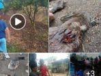 hewan-ternak-warga-mati-misterius-di-wilayah-tapanuli-utara-taput-fix-lagi-2.jpg