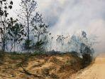 hutan-di-berau-terbakar-tiga-kali-lipat.jpg