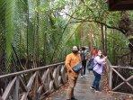 hutan-mangrove-desa-ardi-mulyo-tanjung-palas_1.jpg