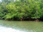 hutan-mangrove-desa-muara-adang.jpg