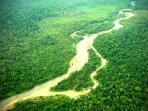 hutan-tropis-kalimantan_20150903_124408.jpg