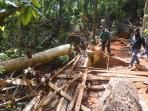 illegal-logging_20160621_171504.jpg