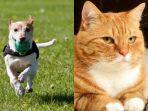 ilustrasi-anjing-dan-kucing.jpg