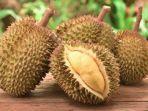 ilustrasi-buah-durian.jpg