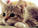 ilustrasi-kucing_20171025_032722.jpg