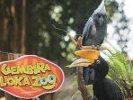 instagram-glzoojogja-gembira-loka-zoo-yogyakarta.jpg