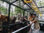 instagram-tamansafariprigen-carnivore-feeding-adventure.jpg