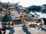 internet-kucing-kucing-di-pulau-tashirojima.jpg