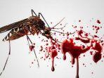 istimewa-nyamuk-penyebab-demam-berdarah.jpg