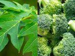 istimewafoodndtvcom-daun-pepaya-dan-brokoli.jpg