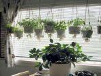 jabartribunnewscom-ilustrasi-tanaman-dalam-ruangan.jpg
