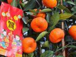 jeruk-mandarin-imlek-2019.jpg