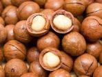 kacang-macadamia-alibaba.jpg