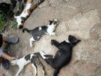 keempat-kucing-milik-warga-gunung-sari-ilir.jpg