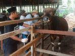 kegiatan-panen-perdana-oleh-produsen-ternak-sapi-bsj-kubar-yang-dihadiri-wakil-bupati-kutai.jpg
