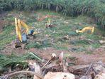 kegiatan-peremajaan-kebun-kelapa-sawit-usulan-tahun-2019-di-desa-suliliran-baru.jpg