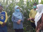 kepala-dinas-pangan-tph-kaltim-siti-farisyah-yana-saat-meninjau-kegiatan-pertanian-keluarga.jpg