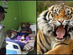 kiri-azmi-30-selamat-dari-terkaman-harimau-kanan-ilustrasi-harimau-sumatera.jpg
